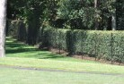 Annerley Chainlink fencing 10