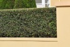 Annerley Privacy fencing 28